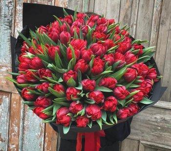 151 красный пионовидный тюльпан
