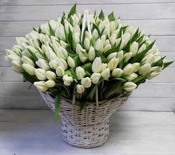 301 белый тюльпан в корзине